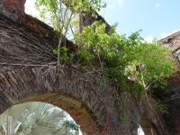 Paramaribo 19 - trees growing on the bricks