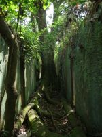 Ile St-Joseph 16 - big trees growing in the cell blocks