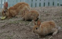 Okunoshima 05 - little family