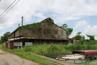 Suriname 27 - overgrown ex-plantation
