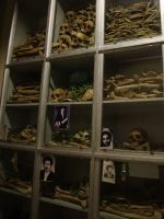Red Terror Museum 14 - bones and skulls of victims