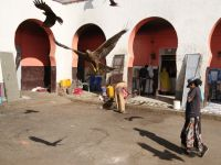Harar 22 - with eagles flying about hoping to snatch some scraps