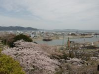 Ishinomaki 08 - with cherry blossoms for contrast