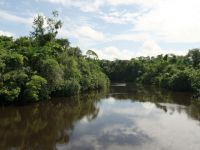 Suriname 03 - Cottica River